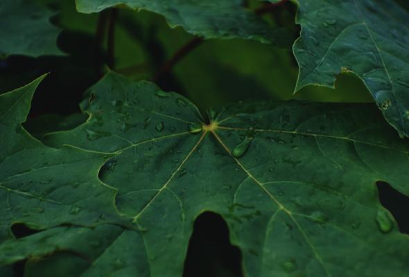 Carbon Handprint